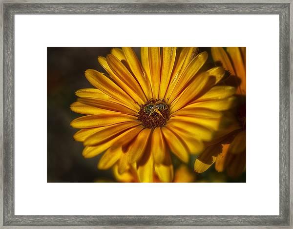 The Flower Inspector Framed Print