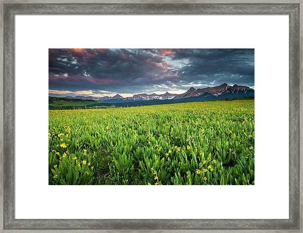 Flower Field And Sneffels Range Framed Print