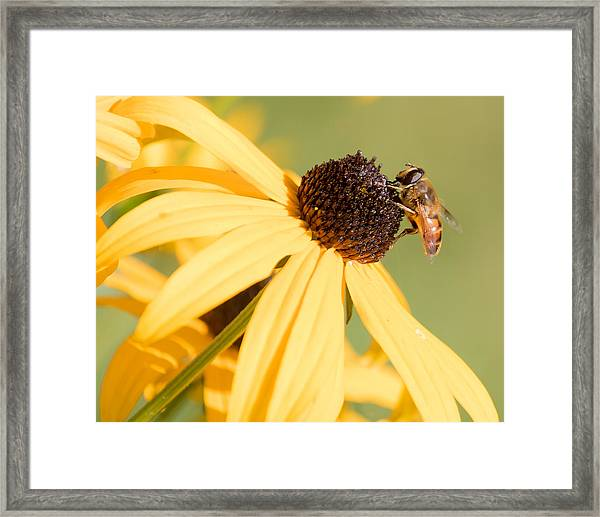 Flower Fly Framed Print