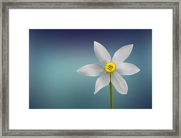 Flower Of Paradise Framed Print