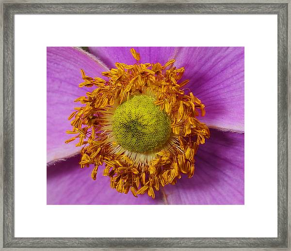 Flower Orbit Framed Print