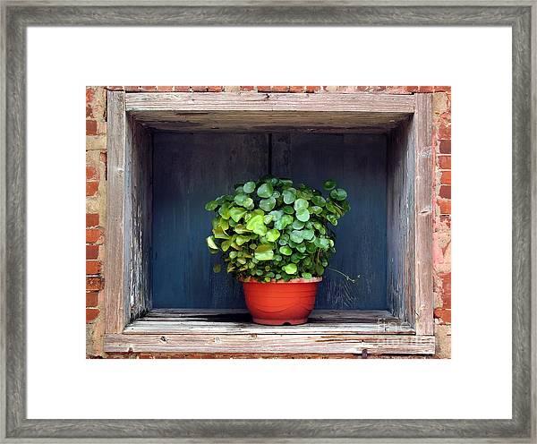 Flower Pot In A Window Framed Print