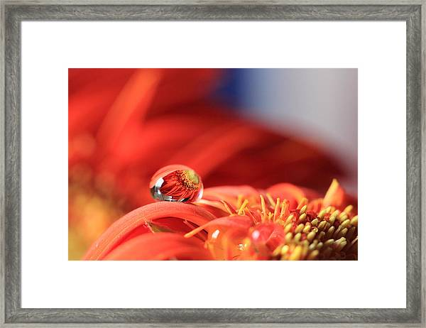 Flower Reflection In Water Drop Framed Print
