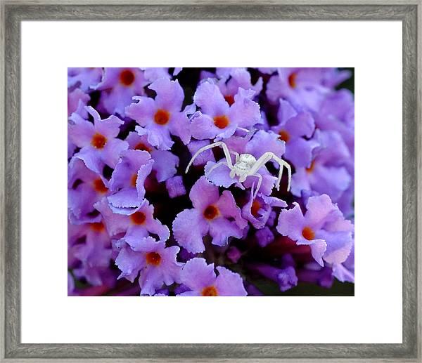 Flower Spider Framed Print