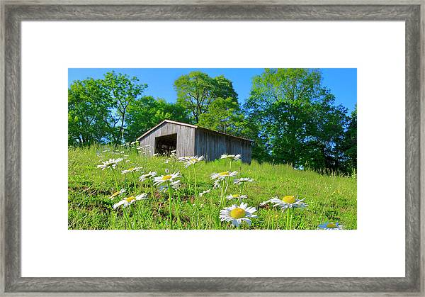 Flowering Hillside Meadow Framed Print