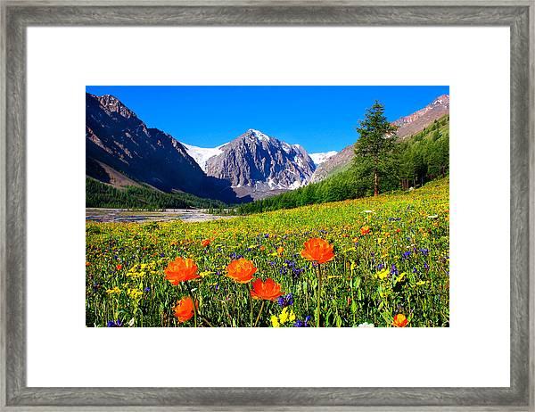 Flowering Valley. Mountain Karatash Framed Print