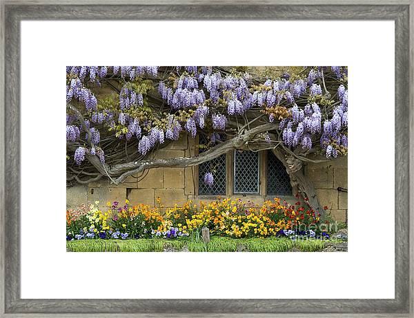 Flowering Wisteria Broadway Framed Print