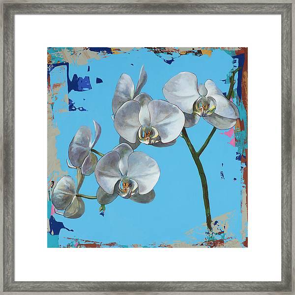 Flowers #15 Framed Print by David Palmer
