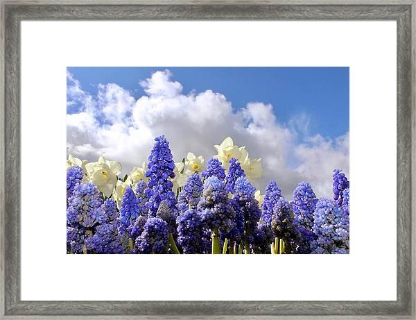 Flowers And Sky Framed Print