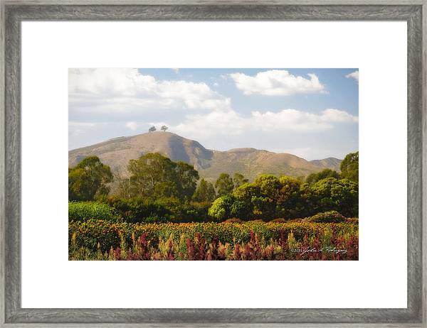 Flowers And Two Trees Framed Print