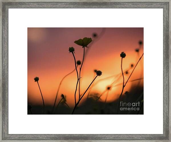 Flowers At Sunset Framed Print