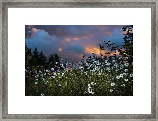 Flowers At Sunset Framed Print