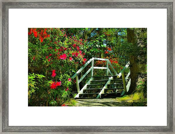Flowers Bloom Alongside Magnolia Plantation Bridge - Charleston Sc Framed Print