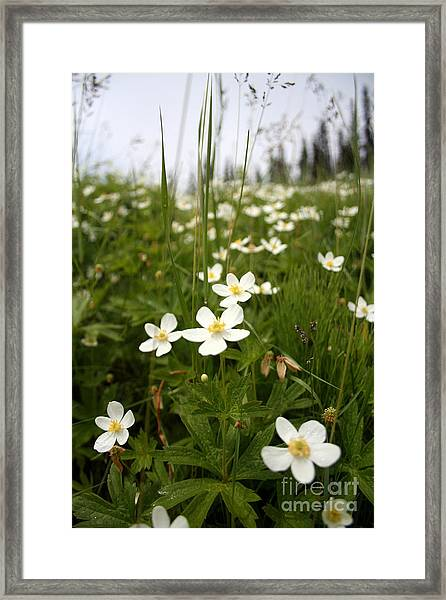 Flowers Everywhere Framed Print by Andrew Serff