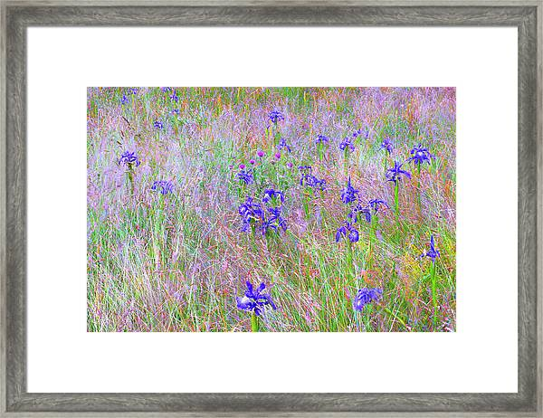 Flowers From Ossue Path Framed Print