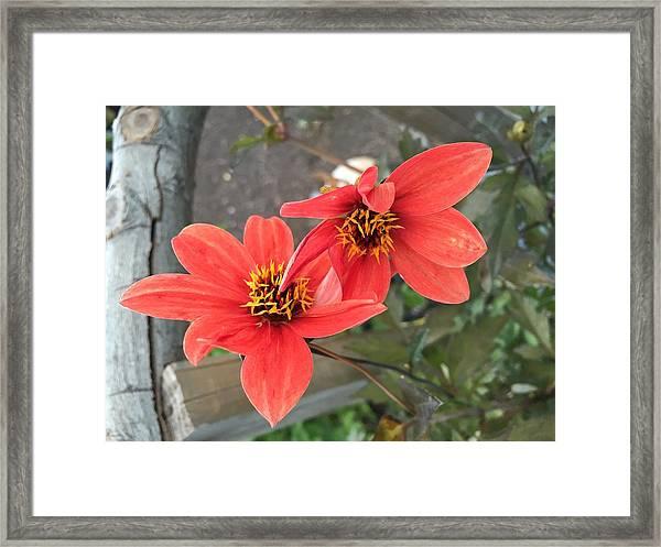 Flowers In Love Framed Print