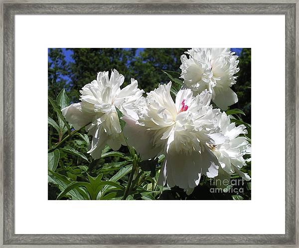 Flowers In The Garden Xx Framed Print by Daniel Henning