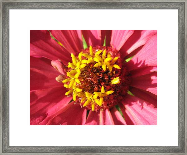 Flowers With In The Flower Framed Print by Rebecca Shupp
