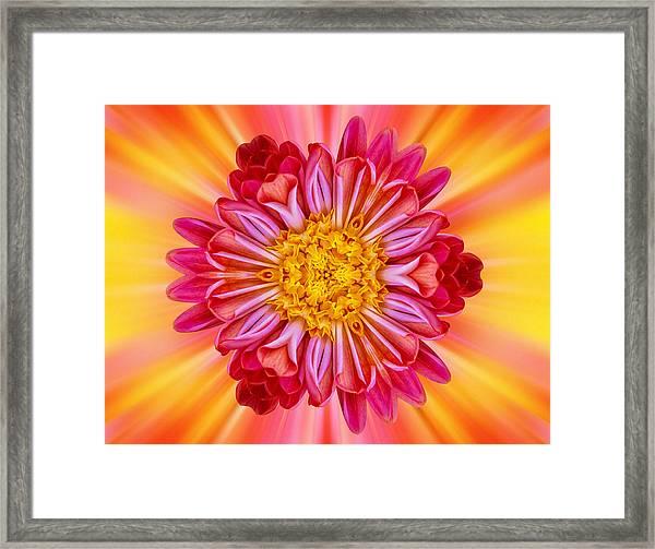 Flowerscope Framed Print