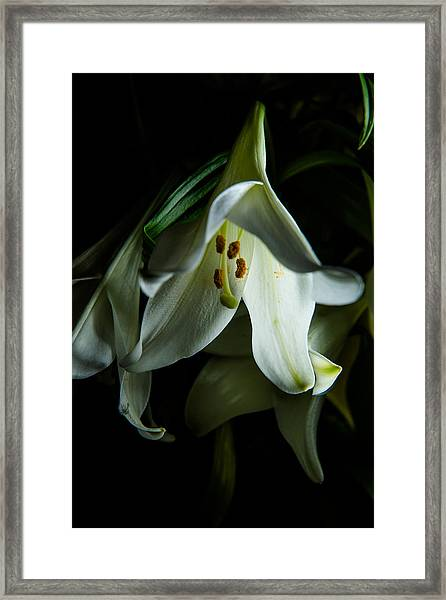 Flowing White Lily Framed Print
