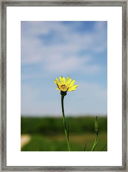 Flp-1 Framed Print