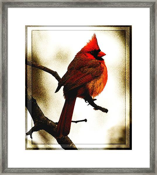 Fluffed Up Framed Print