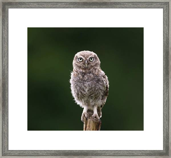 Fluffy Mcfluff-face Framed Print