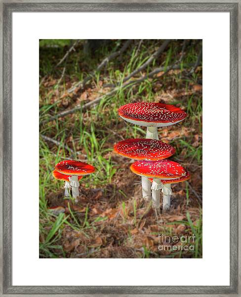 Fly Agaric Amanita Muscaria Framed Print