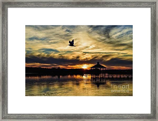 Fly Away Framed Print