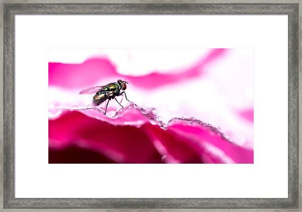 Fly Man's Floral Fantasy Framed Print