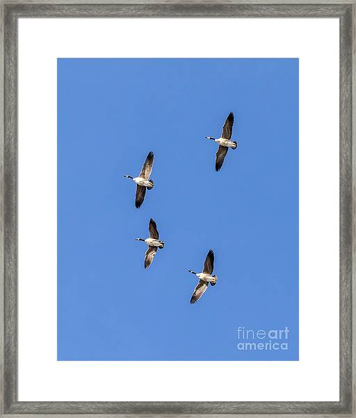 Fly Over Framed Print