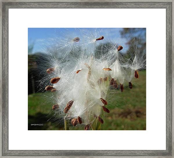 Flying Away Framed Print