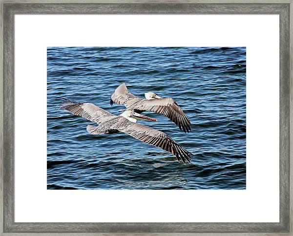 Flying Buddies Framed Print