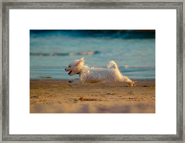 Flying Dog Framed Print