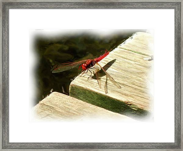 Flying Dragon At Rest Framed Print