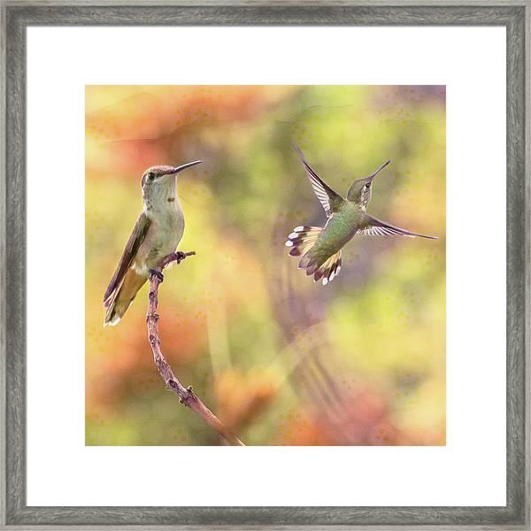 Flying Gems Framed Print