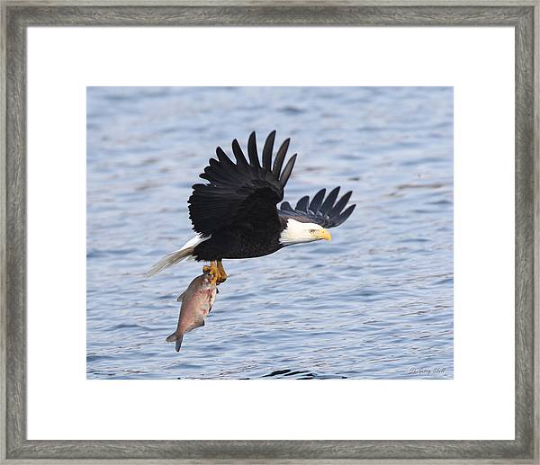 Flying Off With The Catch Framed Print