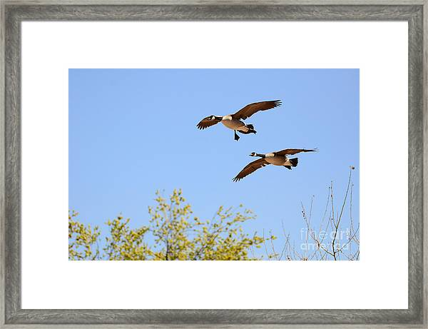 Flying Twins Framed Print
