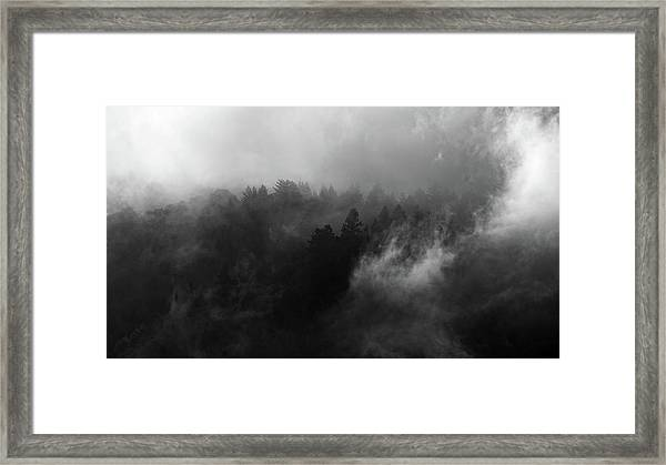Fog Forest Framed Print
