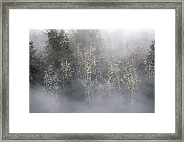 Foggy Alders In The Forest Framed Print