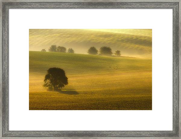 Foggy Fields Framed Print by Piotr Krol (bax)