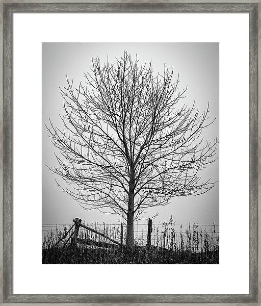 Foggy Lone Tree Hill Fine Art Framed Print