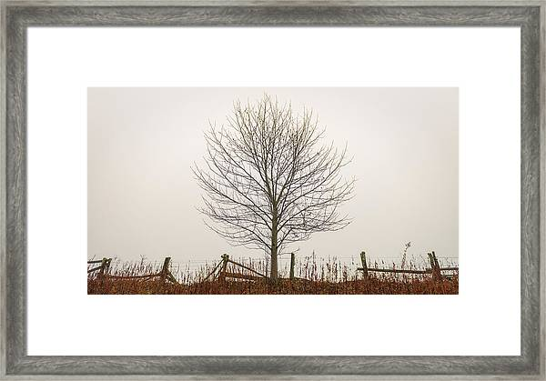Foggy Lone Tree Hill Framed Print