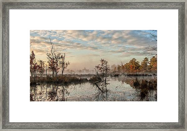 Foggy Morning In The Pines Framed Print