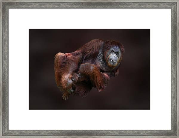Folded Orangutan Framed Print