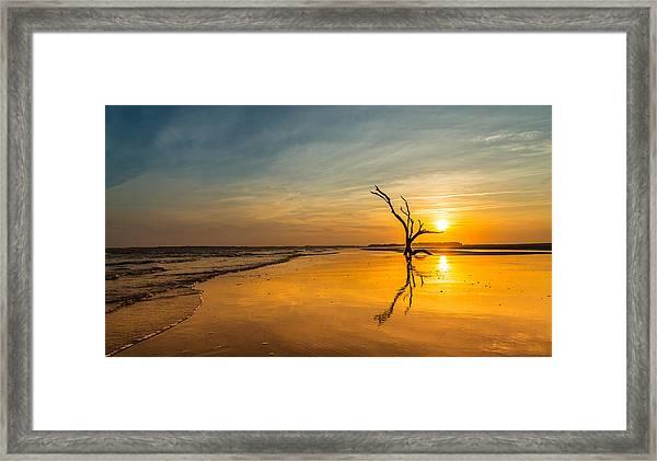 Folly Beach Skeleton Tree At Sunset - Folly Beach Sc Framed Print
