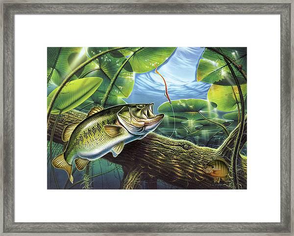 Fooled Again Bass II Framed Print
