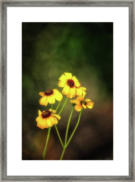 For Everything There Is A Season Framed Print