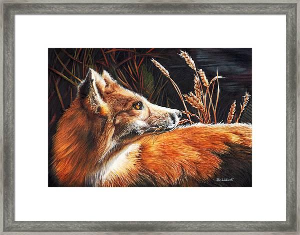For Fox Sake Framed Print