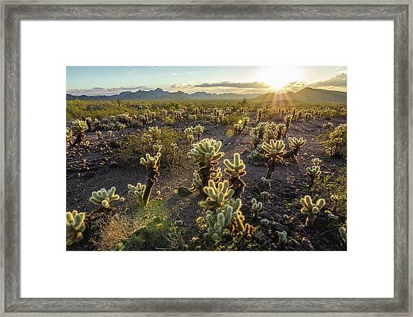 Sea Of Cholla Framed Print